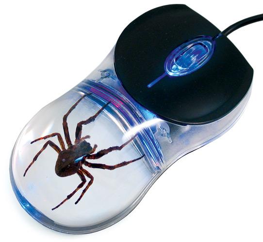 computer spider