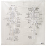 Human Skeleton Shower Curtain